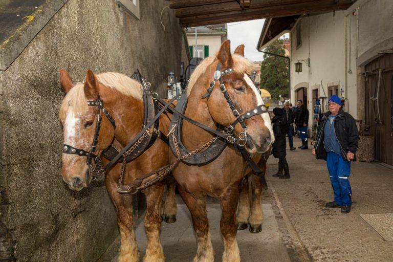 Pferde von Feldschlösschen